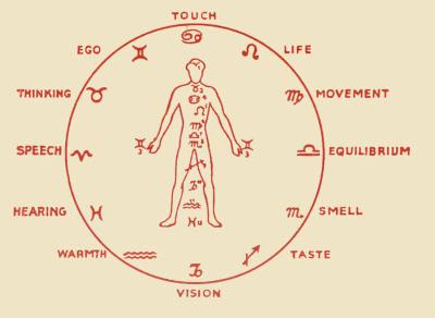 zodiac and individual human 12 part sense system