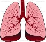 Aggies lungs brain halves
