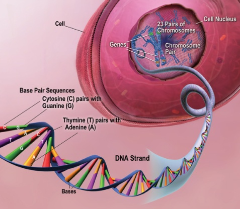 Etheric cellular genetic codes