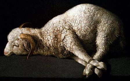 Age of America lamb 1