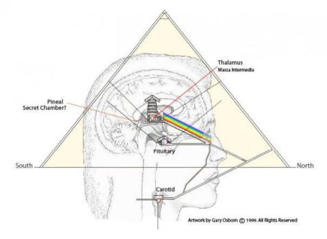 Pyramid and Pineal and Pituitary